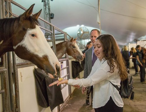 A Sensory Adventure At Cavalia Odysseo